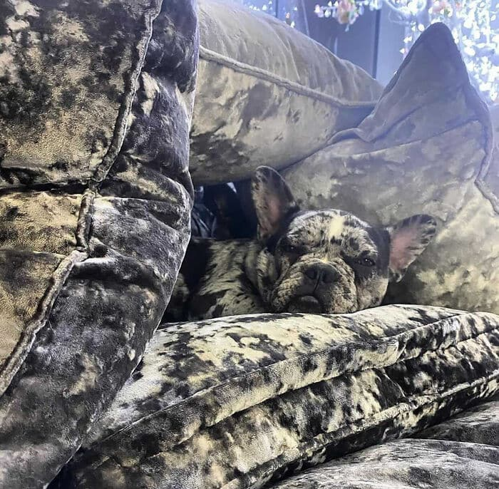 camo-dog-couch