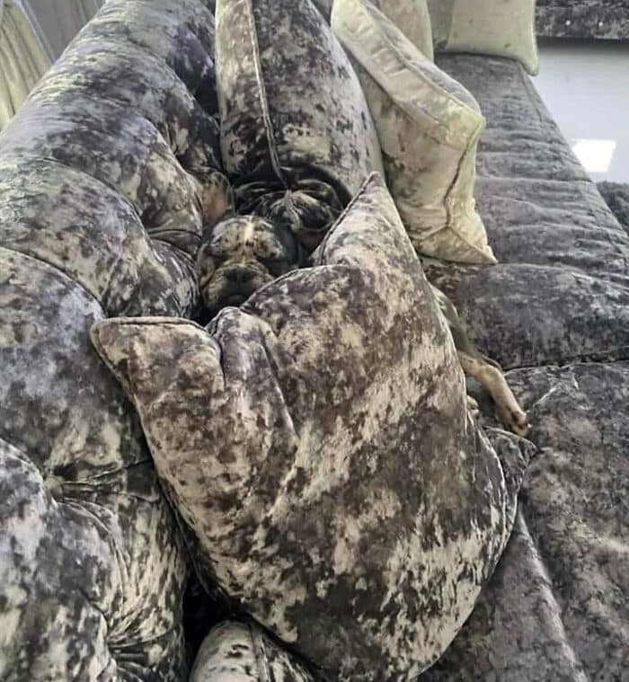 camo-dog-sleeping